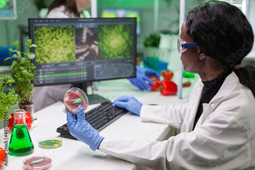 Fotografie, Obraz African chemist researcher holding petri dish with vegan meat in hands while typing genetic mutation on computer