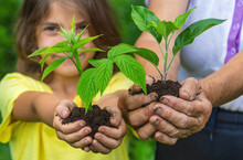 The Grandmother And The Child Are Holding A Plant Sprout In Their Hands. Selective Focus.