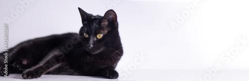 Black cat Fotobehang