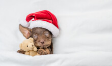 Cozy Tiny Dachshund Puppy Wearing Red Santa Hat Sleeps Under White Blanket At Home And Hugs Favorite Toy Bear. Top Down View. Empty Space For Text