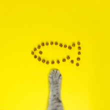 The Cat's Paw Reaches Out To The Cat Food Laid Out In The Shape Of A Fish
