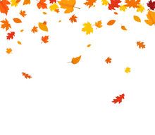 Autumn Falling Leaves Isolated On White Background. Autumn Background With Golden Maple And Oak Leaves.