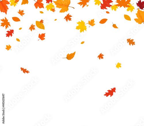 Fotografia, Obraz Autumn falling leaves isolated on white background