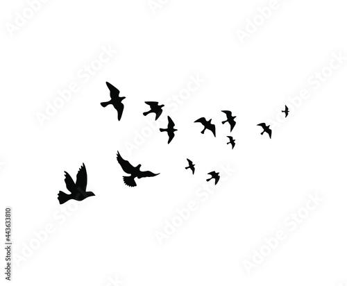 Fotografija aerial a large flock of flying birds. Vector illustration