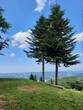 krajobraz przez samotne drzewa