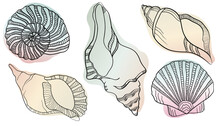 Vector Illustration In Sketch Style. Hand Drawn In Black Engraving. Sea Shells Marine Set. Outline Illustration Collection. Isolated Shell Silhouette Set.
