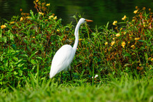 Animal Bird White