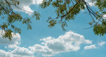 Tree Branch Leaves Over The Blue Sky