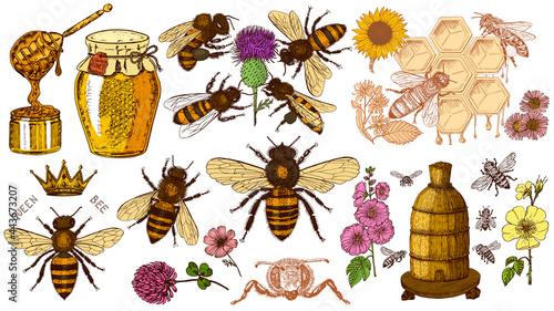 Fotografia Bee and Honey set