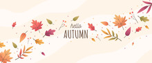 Hello Autumn With Colorful Leaves Background. Banner