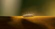 Leinwandbild Motiv Haarige Raupe in der Nahaufnahme