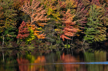 Autumn Leaves Of Many Colors On The Trees And Reflected In The Pond