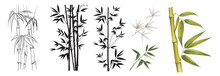 Set Of Differents Bamboo Branches On White Background. Watercolor, Line Art, Outline Illustration.