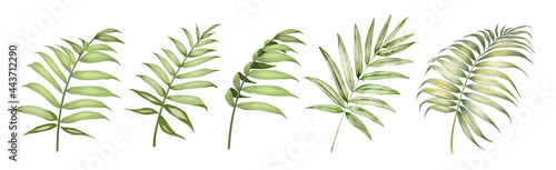 Fényképezés Set of differents palm leaves on white background