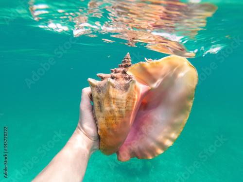 Hand of snorkeling man holding huge conch shell underwater Fototapeta