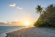 Sunset On A Tropical Beach With Palm Tree