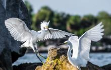 Bird On Rocks