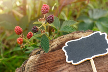 Blackberries Ripping In The Bramble With A Blackboard Sign To Write Over A Wood Stump