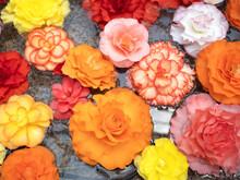 水面に浮かべたベゴニアの花