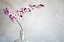 Pink Blooming Cherry Flowers In An Old Tincture Glass Bottle. Close Up