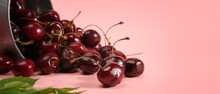 Close Up Fresh Cherries With Leaves On Pink Background.