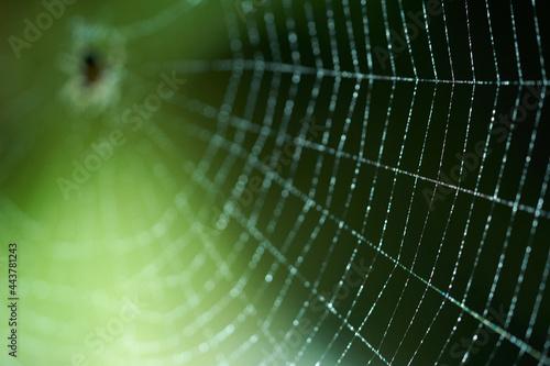 Fotografie, Obraz selective focus on the spider web