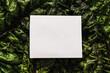Frische rohe Mangoldblätter und ein leerer weißer Notizzettel. Bildhintergrund, Gemüse.