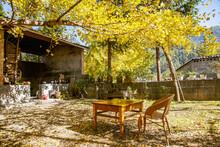 Tengchong In Yunnan Province City Neighborhood Under Solid East Town Village Of Ginkgo Ginkgo Tree