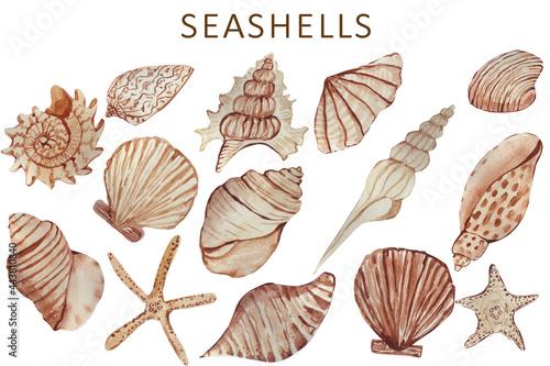 Fotografija collection of seashells watercolor