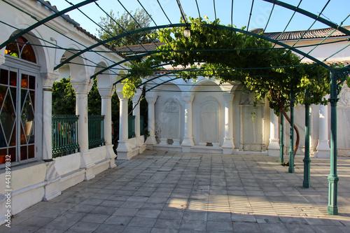 vines grapes architecture park garden
