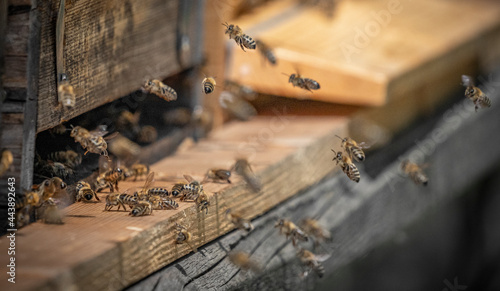 Canvas bee hive - bee breeding (Apis mellifera) close up