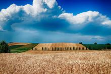 Monferrato - Alessandria - Lu