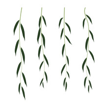 Hanging Branches Of Willow Isolated On White Background. Flat Vector Elements