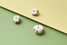 Three Dried Cotton Flowers