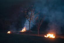 Making Fire To Protect Blossoming Trees
