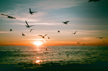 Sunset In The Sea With Seagulls And A Beautiful Clouds.