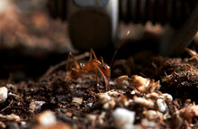 The Microscopic Insect World Under The Lens, Ants