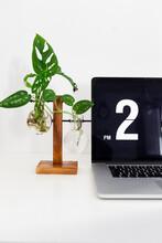 A Monstera Monkey Leaf And A Pothos Argyraeus  In A Hydroponic Pot Near A Laptop