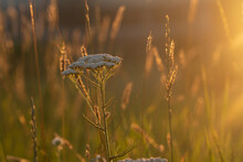 Wildflowers In The Sun. A Meadow Flooded With Sleepy Light