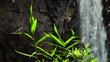 Grass Sway On Wind In Front Of TaGu Waterfall In Vietnam