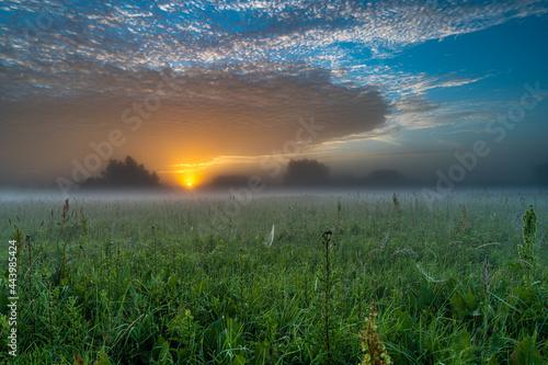 Na łące o wschodzie słońca