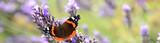 Fototapeta Natura - Schmetterling 843