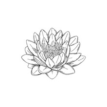 Vector Illustration Of Black Line Hand Drawn Lotus Flower Isolated On White Background
