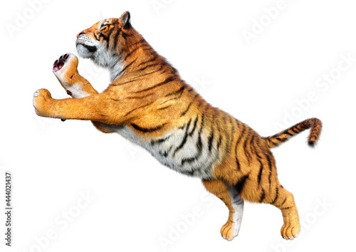Canvas 3D Rendering Big Cat Tiger on White
