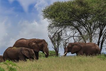 group of elephants standing near trees in savanna