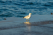 A Seagull On The Pier