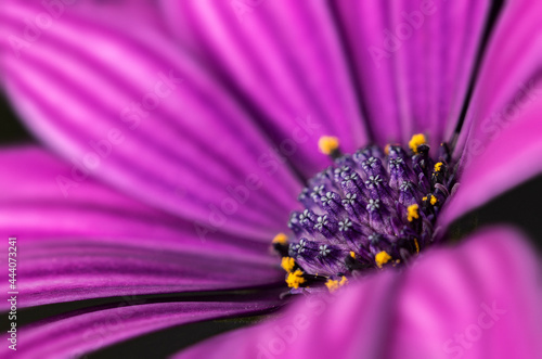 Beautiful flower of purple color, photo of the core of the plant. Closeup of flowers and plants.