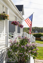 Lilacs In Bloom In Garden With American Flag
