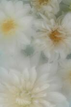 Misted Flower Background