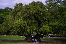 Amigos Debaixo De Uma árvore.